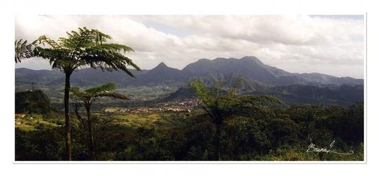Martinique - l'île aux fleurs