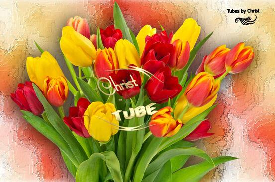 Tulipes rouges / jaunes