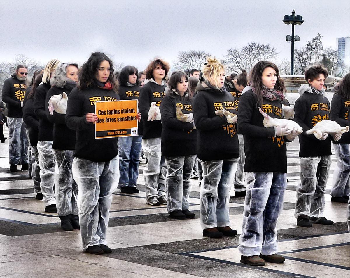 L214 - Lapins morts à Paris