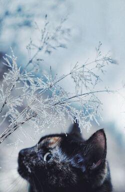 Le chat  photographié au fil des saisons