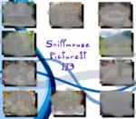 PictureIt 173 - Sniffmouse