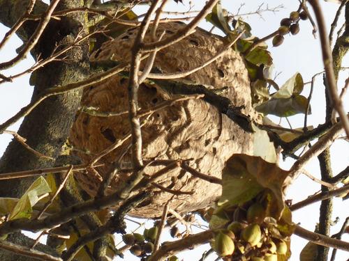 Les différents nids