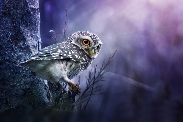 10 Images d'Oiseaux - 2