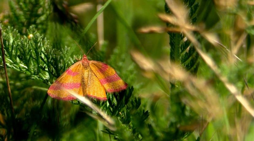 Les papillons de l'été (3) Les discrets