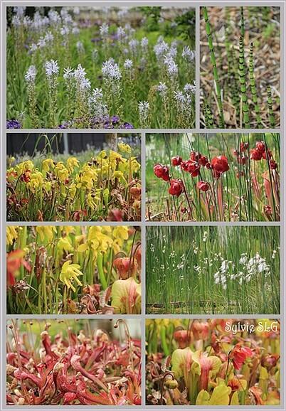 Terra Botanica - Le Végétal Apprivoisé