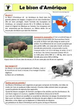 Le bison d'Amérique- fiche documentaire