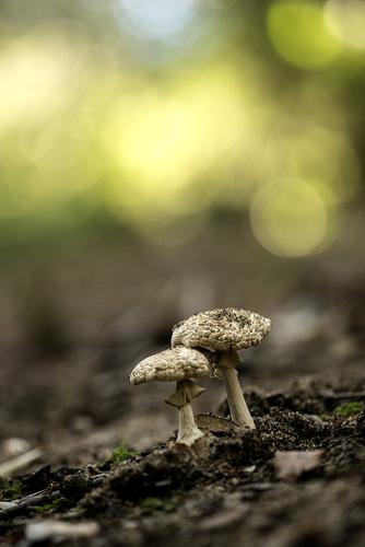 Dans le petit bois ...