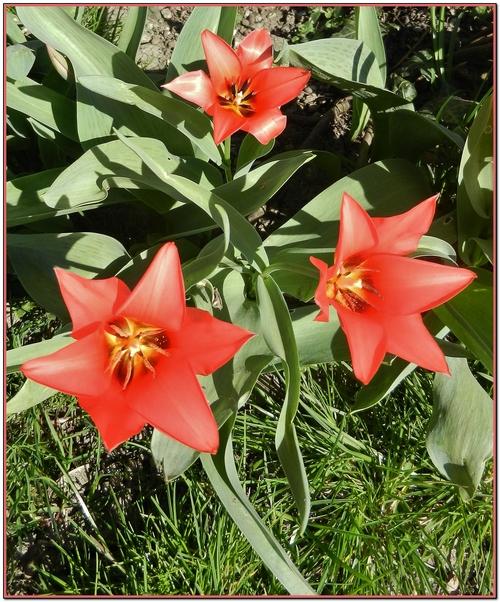 Des fleurs de printemps
