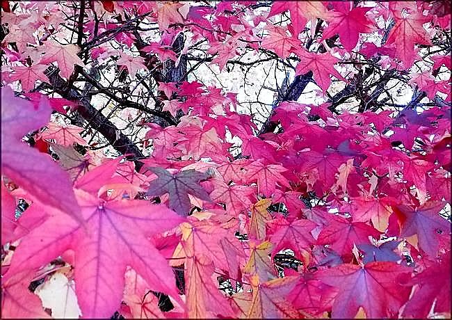 Plein feu sur l'automne