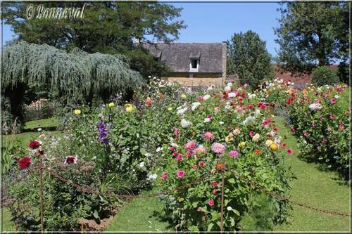 Les Jardins du Manoir d'Eyrignac le Jardin Fleuriste les dahlias