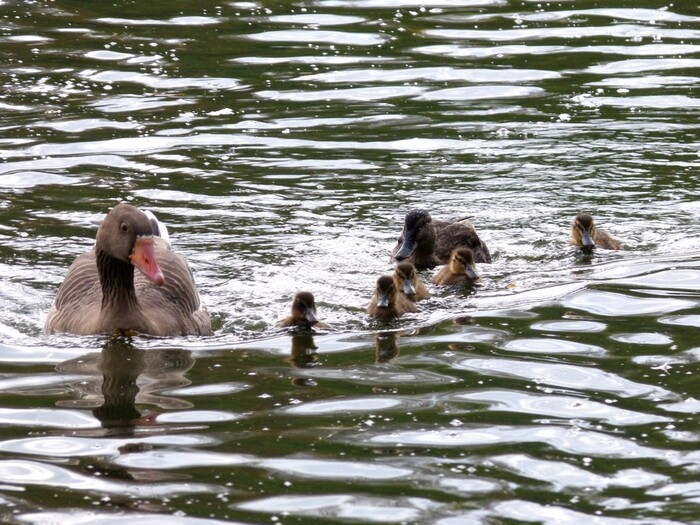Avis de naissance au Parc St-Pierre