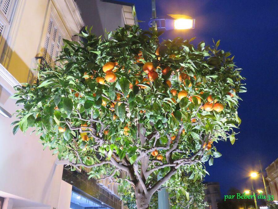 Fête du citrons à Menton - 4