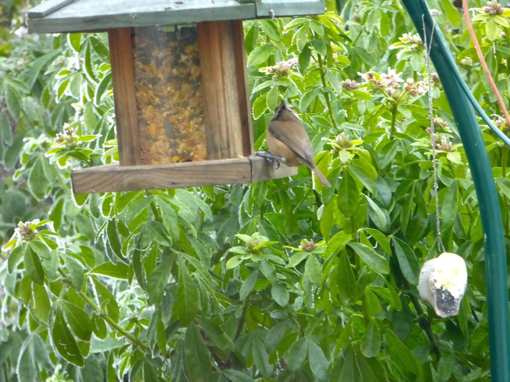 Le jardin et les oiseaux sous le givre.