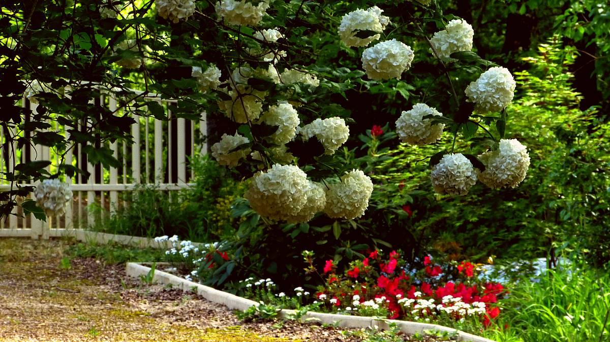 Au jardin de Marithé semaine 18/2013