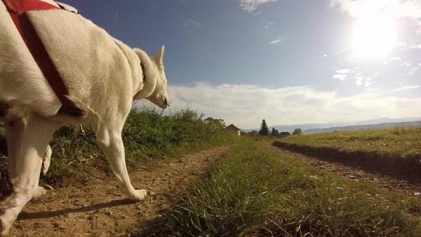husky panorama