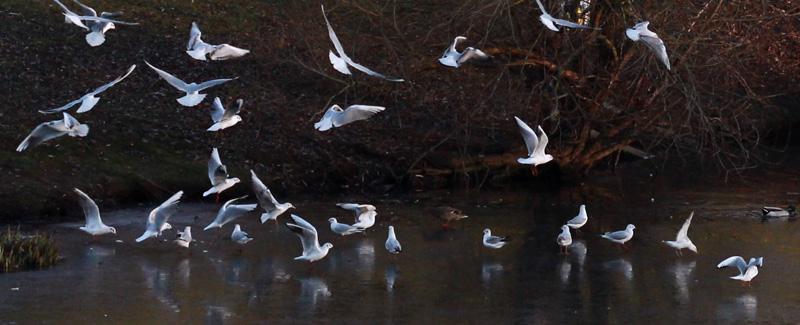 """prochain partage photos de février : """"les oiseaux"""""""