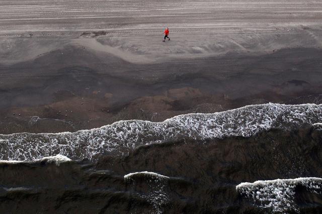 Hécatombe de dauphins suite à la marée noire de BP