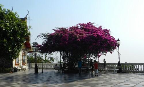 THAILANDE Chang Mai fin