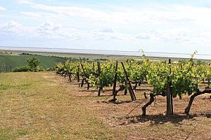 vue sur l'estuaire de la Gironde-2-