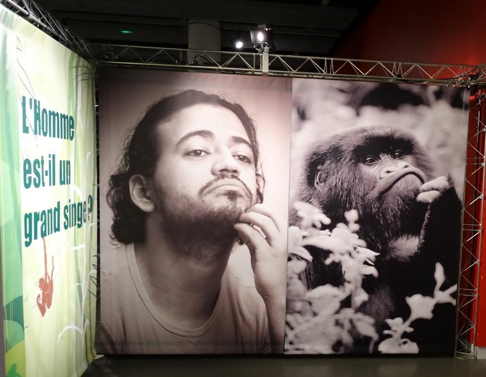 """Exposition """"Le Singe et l'Homme""""..."""
