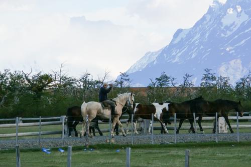 Sagesse Patagonienne