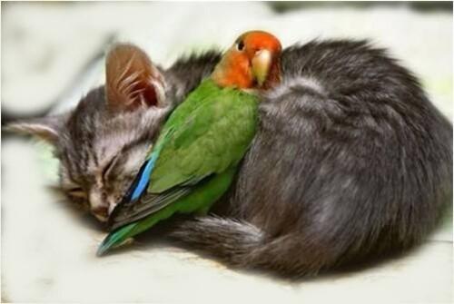 chat-oiseau