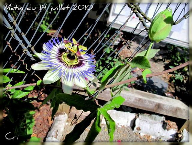 fleurs 4185-1