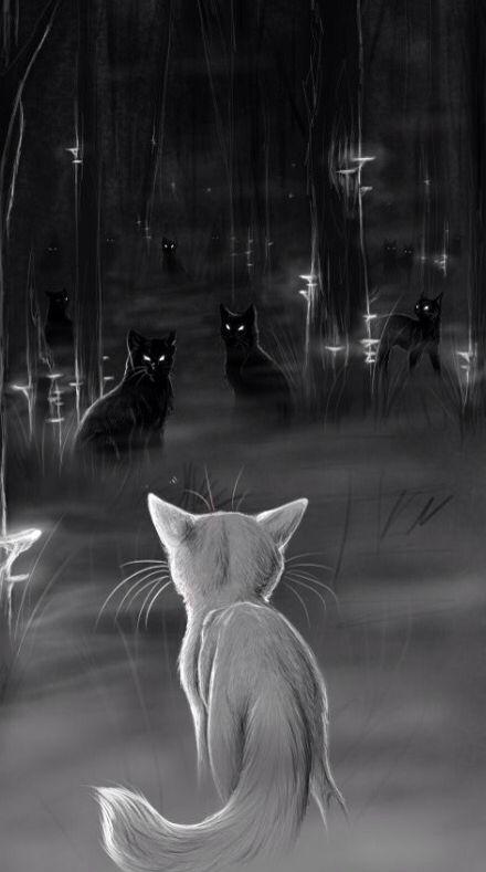 Les chats de la Forêt Sombre