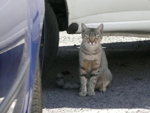 voitures-chat-01_sicile-.JPG