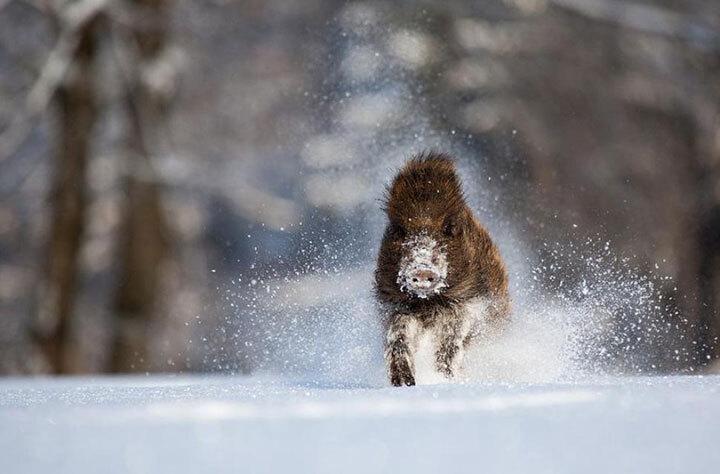 xx-animaux-dont-la-beaute-est-sublimee-par-les-couleurs-hivernales14