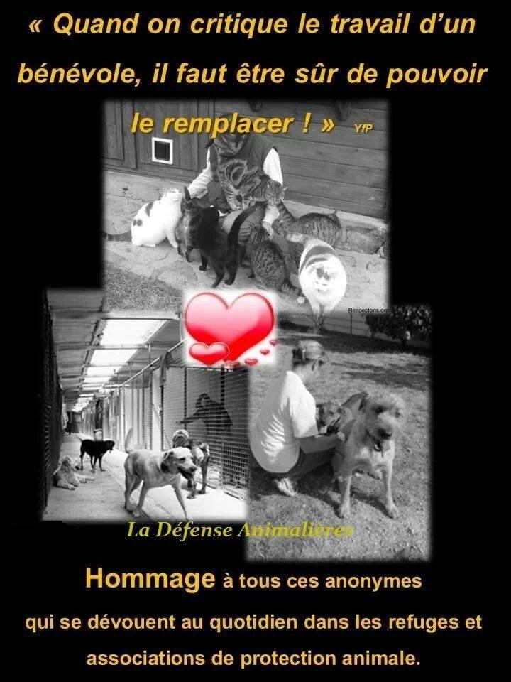 Images du net - page 60
