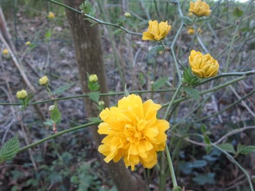 Quelques fleurs printanières