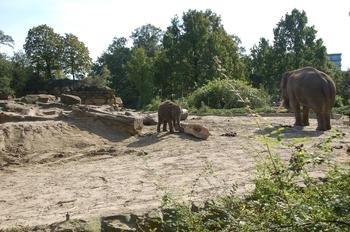dierenpark emmen d50 091