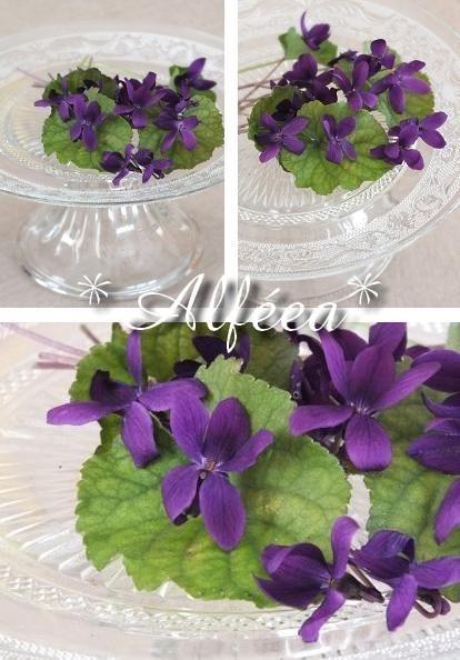 2013-12 violetteparme1