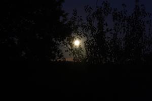 Pleine Lune entre les arbres