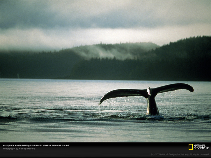 10 Images de Natl. Geographic 3