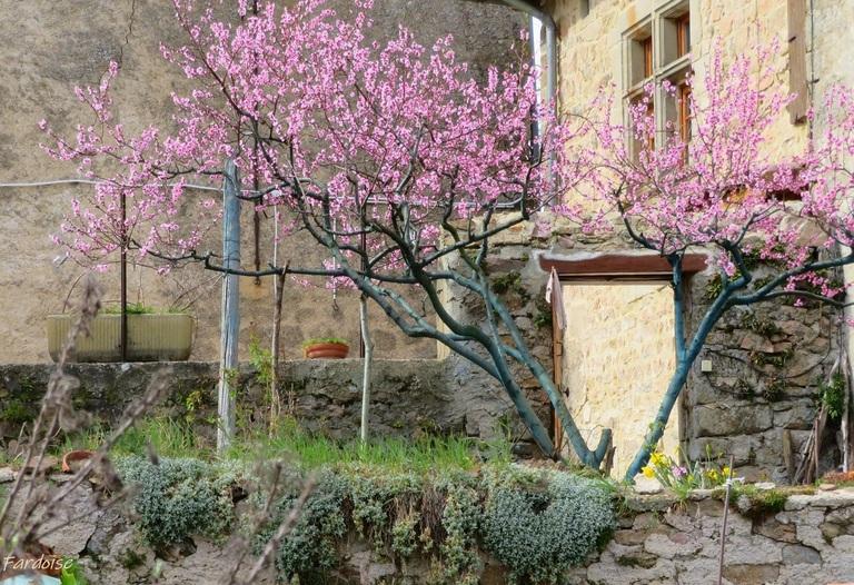 Arbres en fleurs autour d'Alboussière