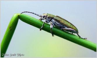 Autres Insectes