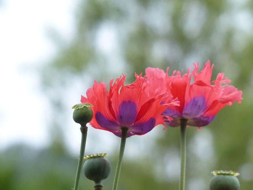 Mes coups de coeur lecture et fleurs