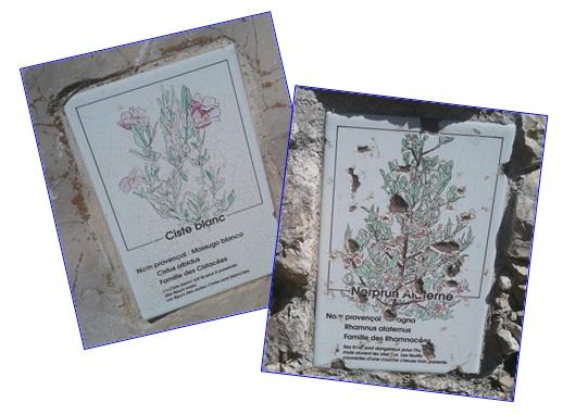 Le sentier botanique de la Batarelle