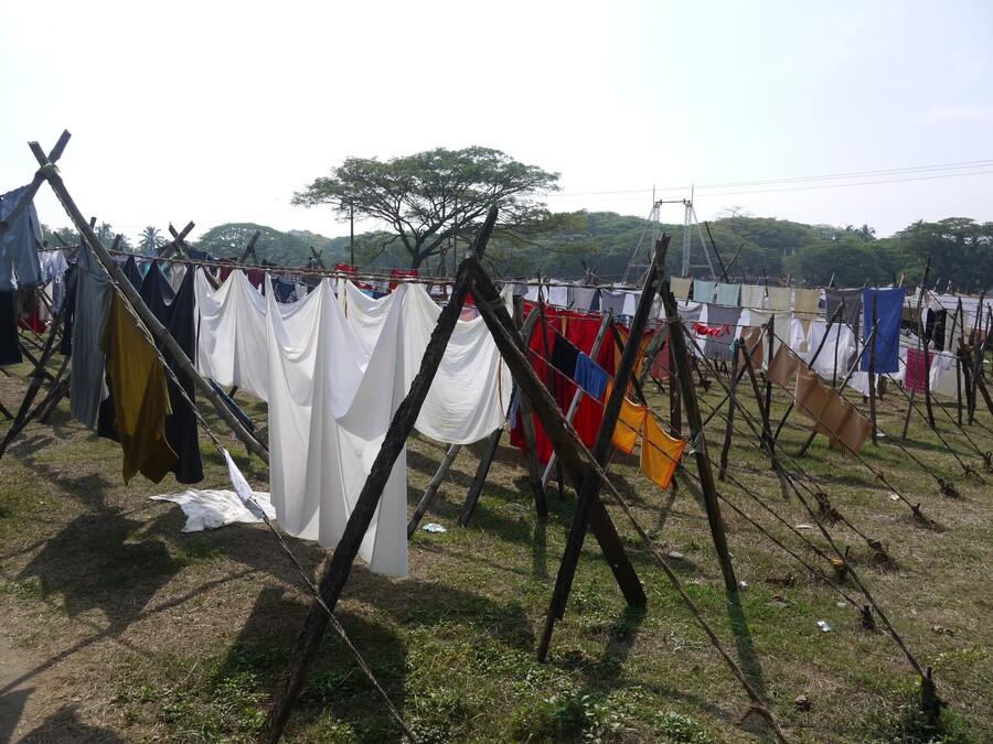 Cochin - La laverie - Inde du sud