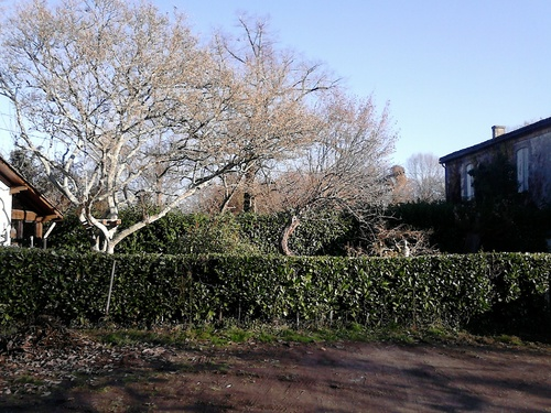 Premières images du jardin