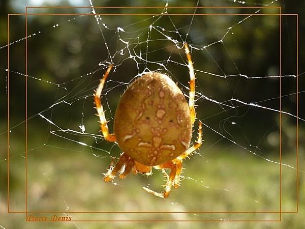 Araignée-copie-2
