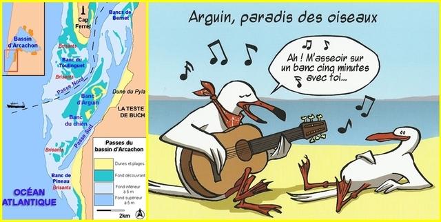 Le Banc d'Arguin