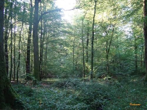 Jules Renard  -  Histoires naturelles (extraits) II
