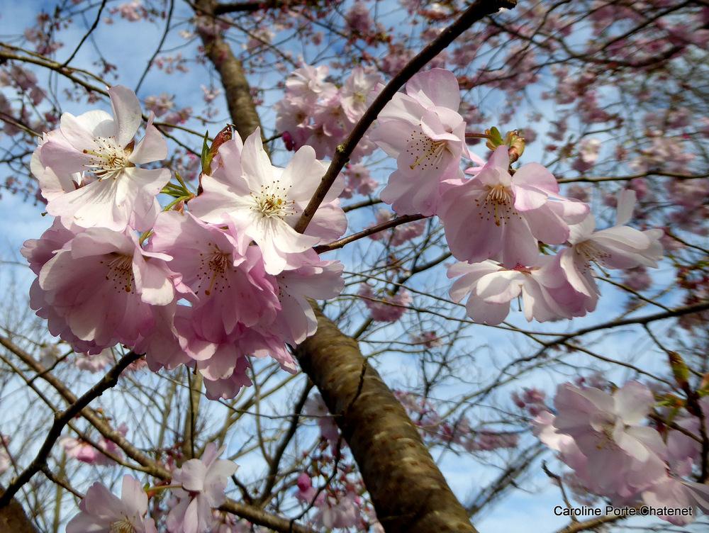 *Le printemps s'annonce*