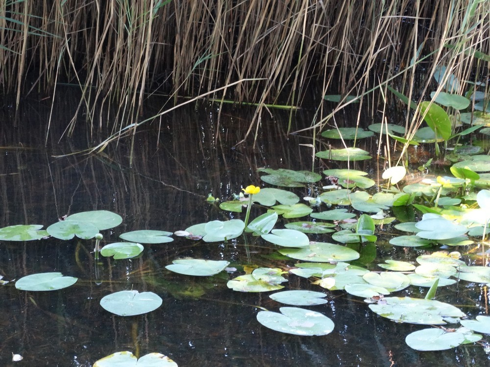 Fleurs Sur Le Lac De Lacanau Une Bonne Nouvelle Par Jour