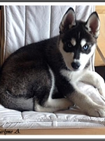 Maïko (2,5 mois)