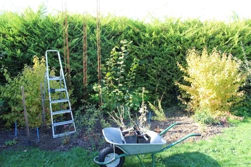 Nouvelle plantation de rosiers