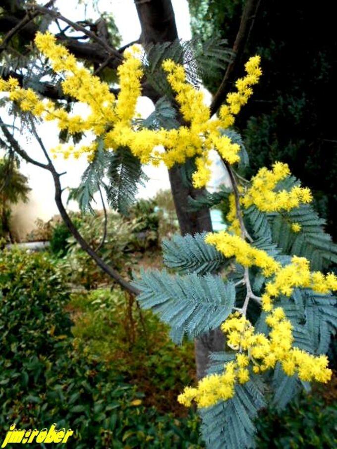Comme la Côte d'Azur ,il est en fleurs